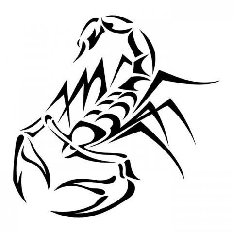 Эскиз тату скорпиона